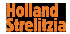 Holland Strelitzia